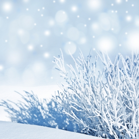 snow covered nature - winter background