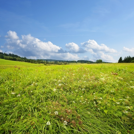 summer meadow - countryside landscape photo
