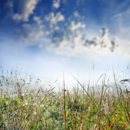 spider net: autumn morning background - grass with dewy spider net