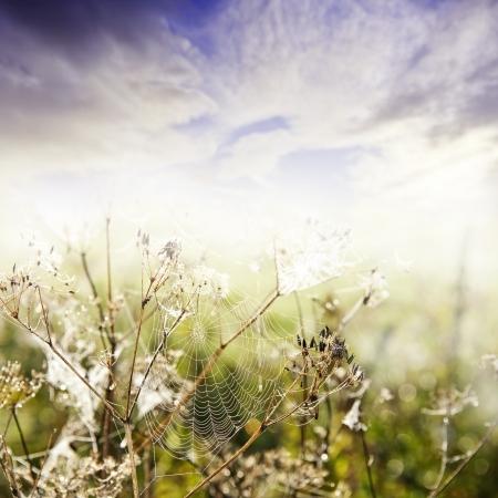 spider net: autumn morning  - dewy grass with dewy spider net