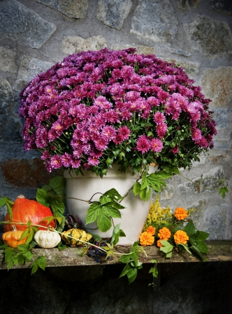 autumn still life with autumn flowers and pumpkins Stock Photo - 15317522
