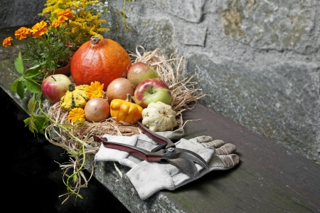 fall still life with halloween pumpkins in the garden photo