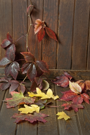 autumn leaves on old wooden background photo