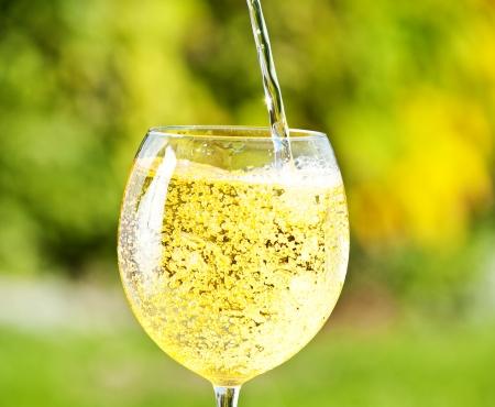 lambrusco: sparkling vine - lambrusco
