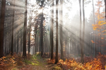 sun beams in an autumn forest photo