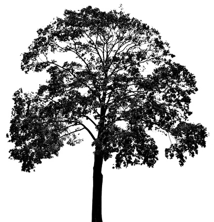 tree line: a tree silhouette Stock Photo