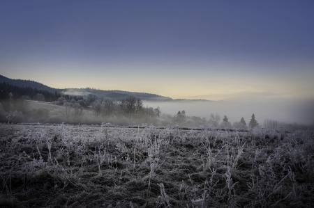 fogy winter morning photo