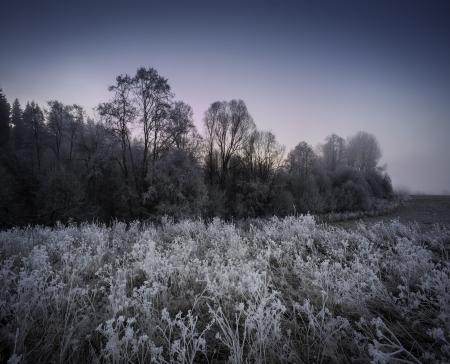 fogy winter morning - frozen landscape photo