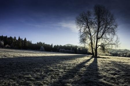 sunny winter morning photo