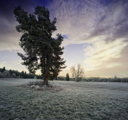 a winter morning with al sunrise photo