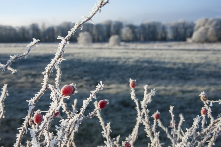frozen hips covered with ice crystals photo