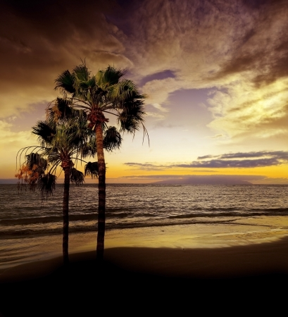 sunset above sea and palms photo