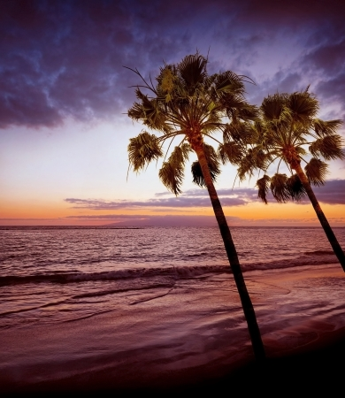 sunrise and ocean and palms Stock Photo - 16810111