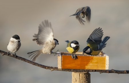 feeder: birds eating seed from bird feeder in the winter time