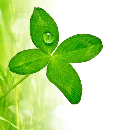 four leaf clover and grass background  photo