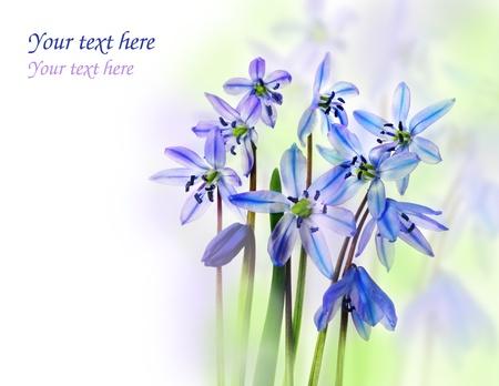 spring flowers Stock Photo - 17236357