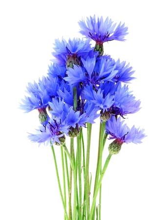 bouquet of cornflowers isolated on white background Stock Photo - 17241811