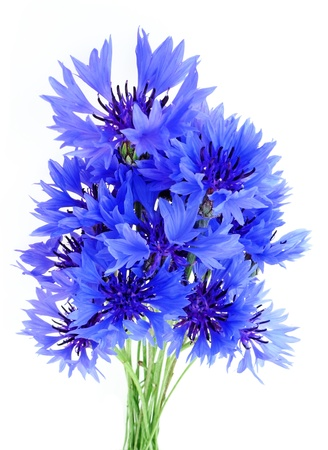 bouquet of cornflowers Stock Photo - 17241822