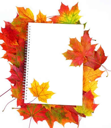 blank paper and frame from fall leaves isolated  photo