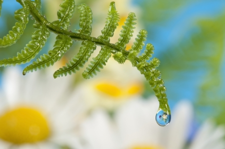 mirroring: fern with dew drop with mirroring efect