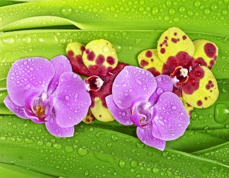 dewy: dewy orchid and leaves