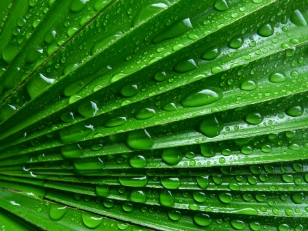 palm leaf with water drops photo
