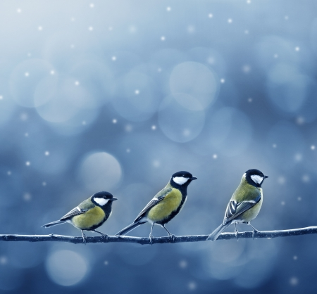 christmas eve: three titmouse birds in winter time