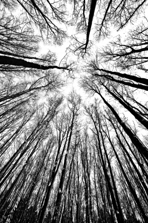 treetops: black and white trees silhouettes