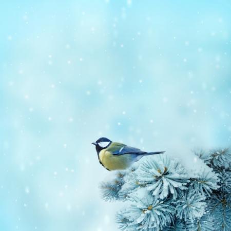 bird  great titmouse   in winter time  Reklamní fotografie