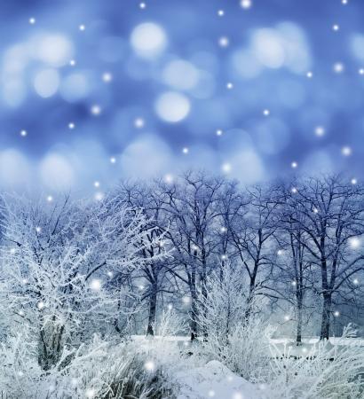 snow scenes: snow covered landscape