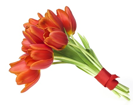 bunch of tulips isolated on white background Stock Photo - 17382778