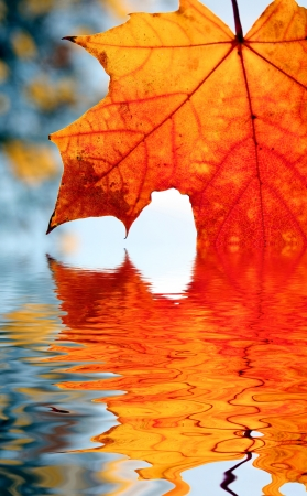 mirroring: autumn leaf and mirroring