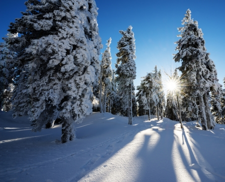 snow drift: winter evening
