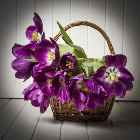 purple tulips in a basket - old  style photo
