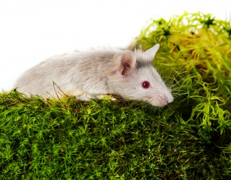 a little mouse on a green moos