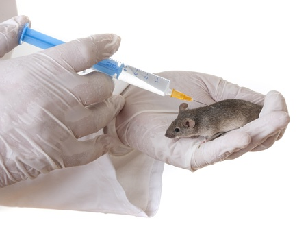 testing drugs in mice in a lab