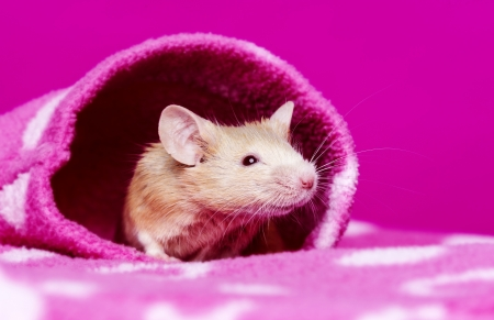 cute little mouse Stock Photo - 17931861