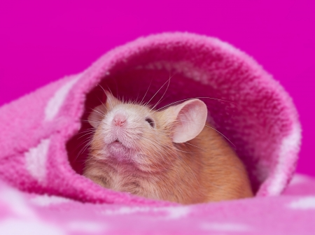cutelittle mouse - pink background Stock Photo - 17931832