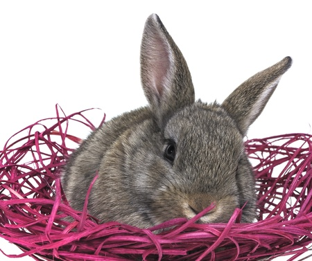 a little brown rabbit in a pink nest photo