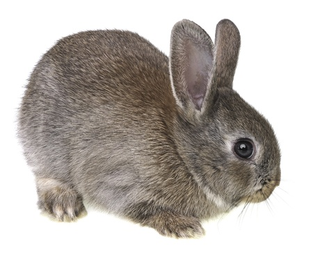 a little rabbit isolated on a white background photo