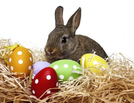 little cute baby rabbit and painted easter eggs - white background photo