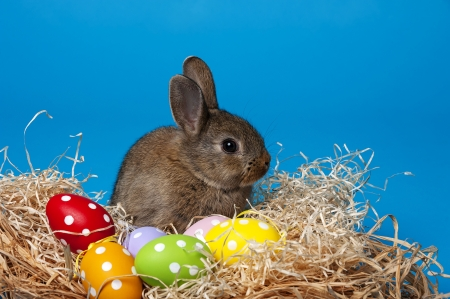 little cute baby rabbit and painted easter eggs photo
