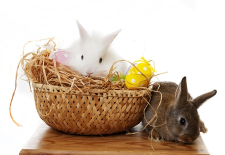 easter rabbit and easter eggs on a white background photo