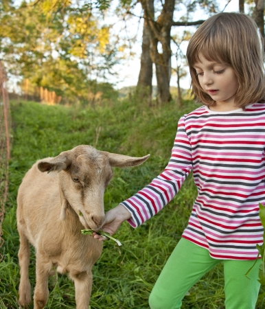 little girl feeding goat photo