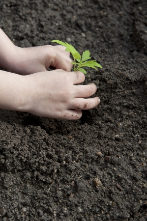 childrens hands and little plant - gardening photo