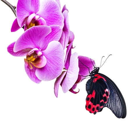 tropical butterfly sitting on an orchid photo