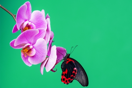 red tropical butterfly sitting on an orchid photo