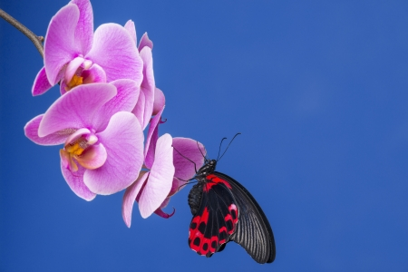 red tropical butterfly on an orchid photo
