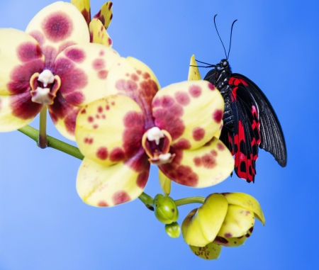 exotic butterfly sitting on an orchid flower photo
