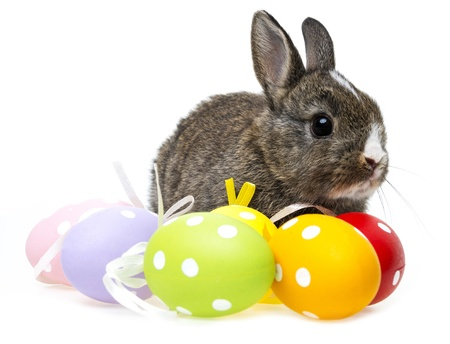 little rabbit and easter eggs isolated photo